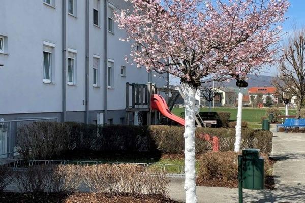 Libellenweg-1,-3-Zugang